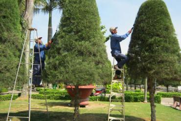 Album hình ảnh công nhân công viên cây xanh