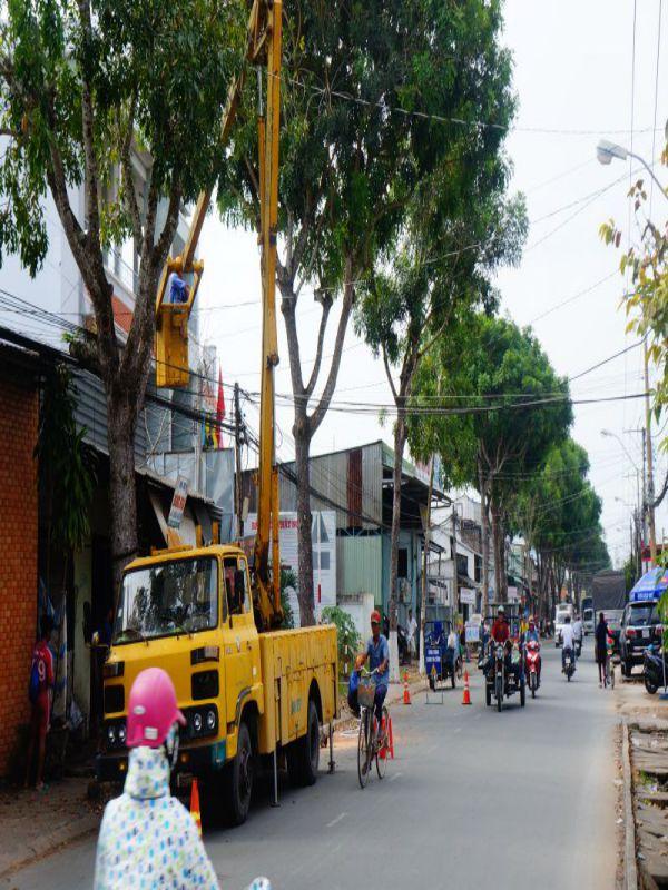 Bộ phận Cây xanh đường phố