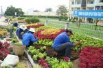 THVL-Tăng cường mảng xanh cho Thành phố Vĩnh Long